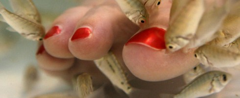 h-wd0509-fish-pedicure[1]